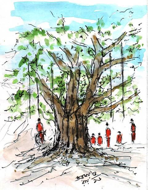 chebulic-myrobalan-tree-drawing