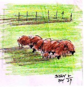 lyra coloured pencil sketch
