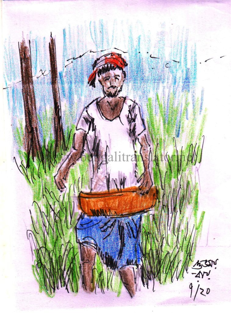drawing of a paddy farmer