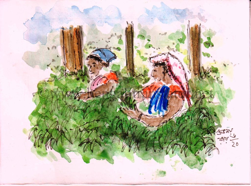water colour sketch of women plucking tea leaves