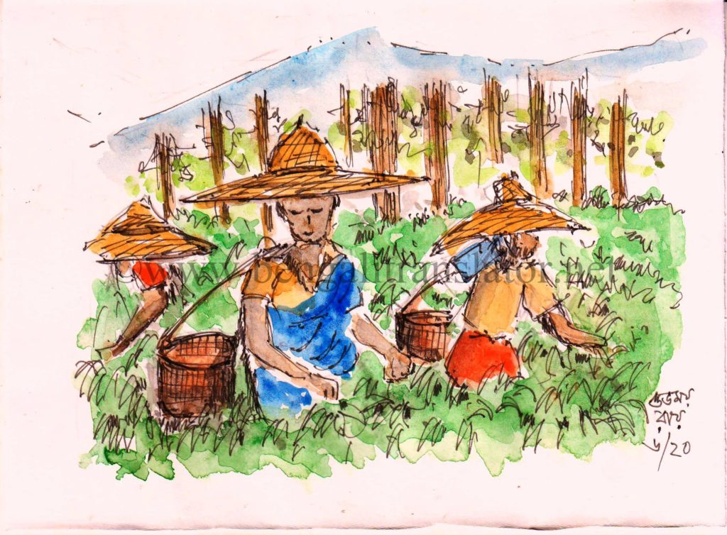 water colour sketch of tea garden workers
